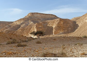 Acacia tree under the hill in the rocky desert at sunset