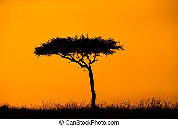 Acacia Treee Silhouette With Orange Sky