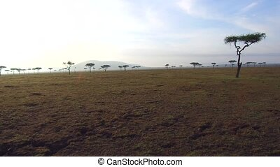 acacia trees in savanna at africa - nature, landscape,...