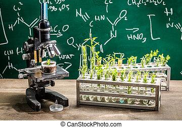 acadêmico, laboratório, durante, estudo, crescendo, plantas