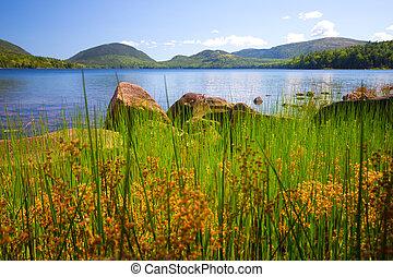 Acadia Lake Maine - Lake viewed through tall grass from...