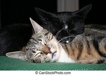 acaricie, gatinhos