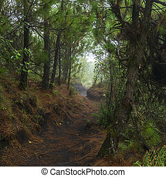 Acatenango Guatemala Hiking Trail