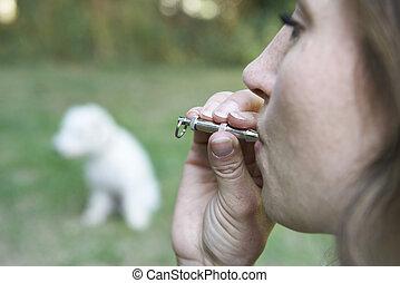 accarezzi proprietario, addestramento, cane, usando, fischio
