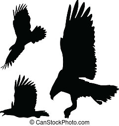 acción, águilas, siluetas, vector