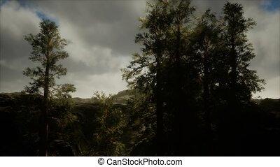 accidenté, arbres, flanc montagne, pin, orage, brouillard, ...