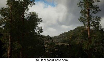 accidenté, flanc montagne, pin, brouillard, arbres, orage, ...