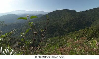 accidenté, rainforest, exotique, costa rica