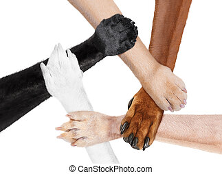 accomunato, cerchio, paws, mani, squadra