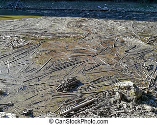 Accumulation of reeds in the water