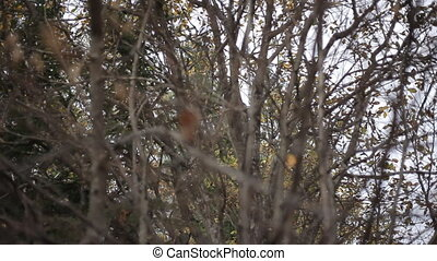accumulation of thin branches - accumulation of many thin...
