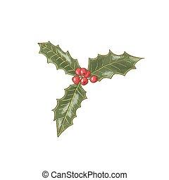 acebo, símbolo, plant., ilustración, winterberry., navidad, baya, decorativo, icon.