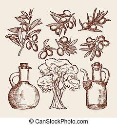 aceite de oliva, en, bottling., olivo, y, otro, mano, dibujado, alimentos