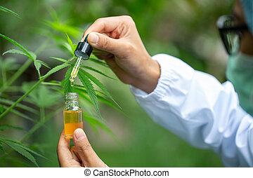 aceite, medicina, herbario, investigar, greenhouse., retrato, máscara, científico, aceite, alternativa, guantes, cbd, industria, pharmaceptical, cáñamo, concepto, examinar, anteojos