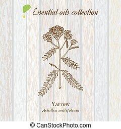 aceite, puro, de madera, colección, textura, plano de fondo,...