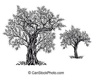 aceituna, árboles