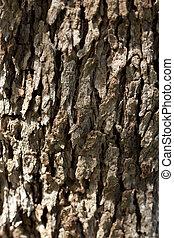 aceituna, corteza, árbol
