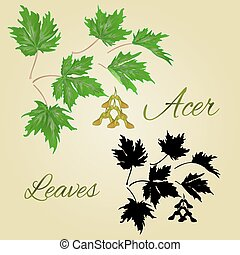 Acer-Maple leaves vector.eps - Acer-Maple green leaves...