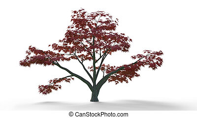 tree with red leafs