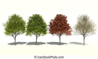 3D computer rendered illustration Acer saccharum Four Seasons