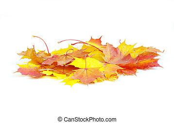 acero autunno parte