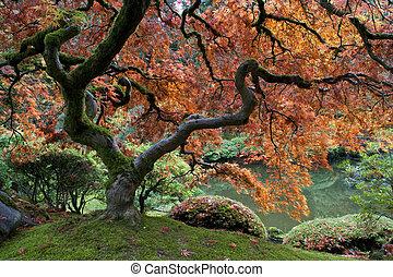 acero, giapponese, rosso, giardino