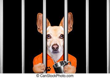 achter, dog, staaf, gevangenis, gevangenis