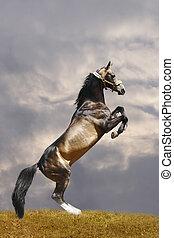 achtergedeelten, paarde