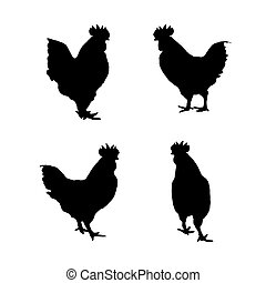 achtergrond., beeld, vector, chicken, witte