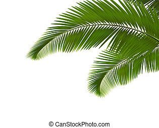 achtergrond., bladeren, palm, witte , vector.