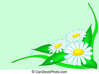 achtergrond, bloemen, en, kruid, met, dewdrop