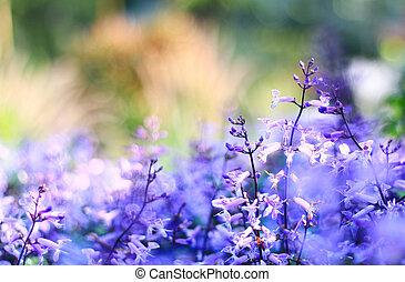 achtergrond., bloemen, zonopkomst, vaag