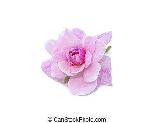 achtergrond., damast, bloem, roos, roze, witte
