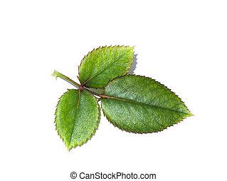 achtergrond., groene, dichtbegroeid boven, het wit nam toe, blad