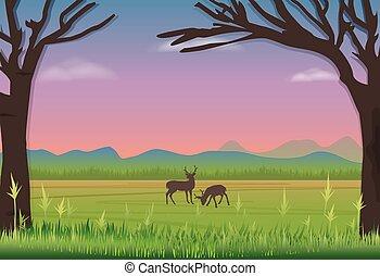 achtergrond, hertje, landscape, staand, meadow., natuur