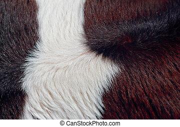 achtergrond, koe, fur.