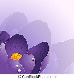 achtergrond, met, krokus, bloem