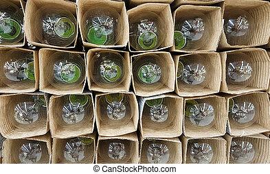 achtergrond, met, nieuw, bloembollen, in, verpakking