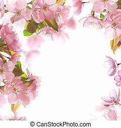achtergrond, met, roze, blossom