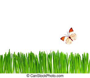 achtergrond, met, vlinder, en, gras