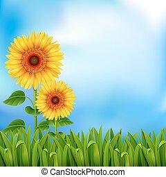 achtergrond, met, zonnebloemen