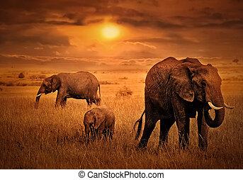 achtergrond, ondergaande zon , olifanten