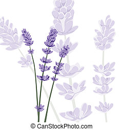 achtergrond, vector, lavendel, vrijstaand