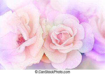 achtergrond, verdoezelen, bloem, achtergrond, rose kwam op