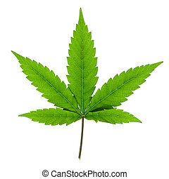 achtergrond., witte , blad, vrijstaand, cannabis