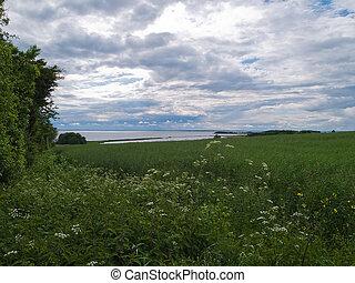 achtergrond, zee, velden, sterke drank, groene