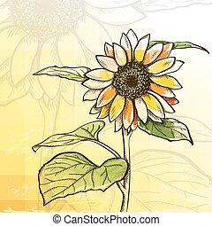 achtergrond, zonnebloem, schets