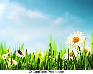 achtergronden, weide, madeliefje, bloemen, jouw, seizoenen, ontwerp