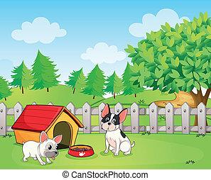 achterplaats, twee, honden