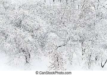 acima, vista, de, neve coberta, maçã, árvores, em, jardim